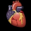 5) Anatomia e Fisiologia