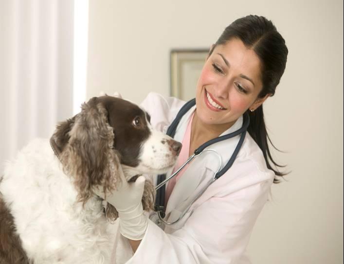 test anni precedenti medicina veterinaria simulazione online