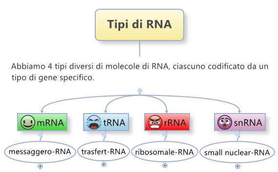 Tipi di rna e le loro funzioni abbiamo 4 tipi mrna trna rrna snrna - I diversi tipi di droga ...