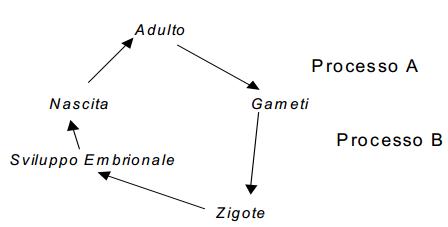 Lo schema rappresenta il ciclo vitale di un essere umano.