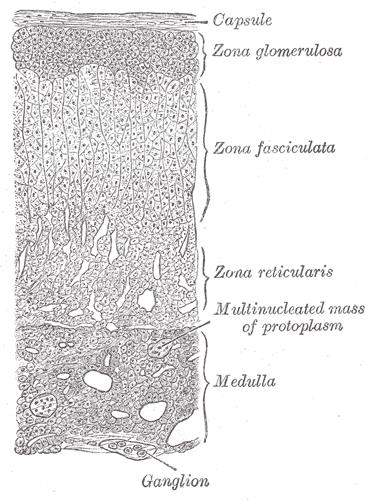 sintesi ormoni steroidei pdf