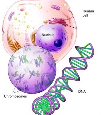 Il materiale genetico