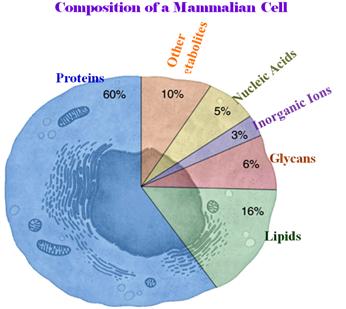 Componenti della cellula